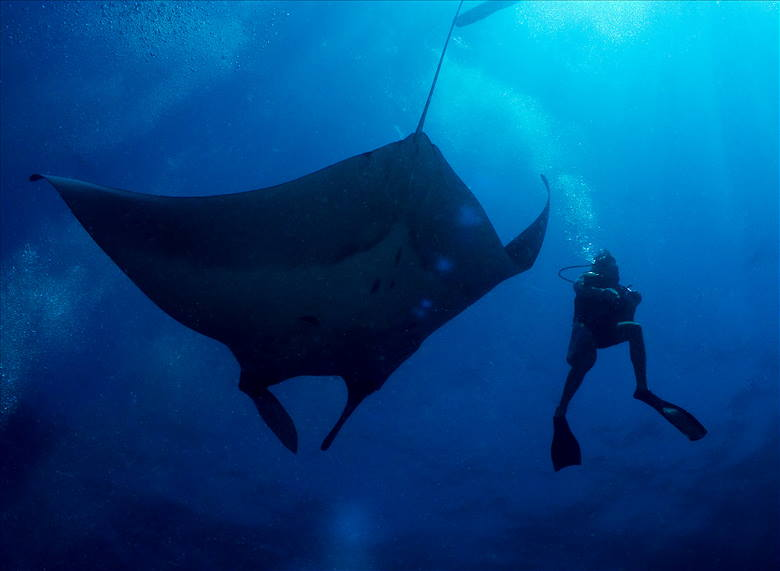 Photo of Manta Ray at Koh Bon, Similans liveaboards diving with Phuket dash Scuba.
